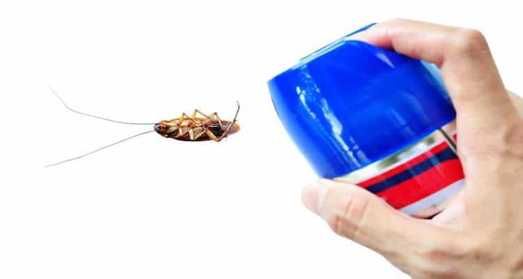 Insektenspray gegen Ungeziefer