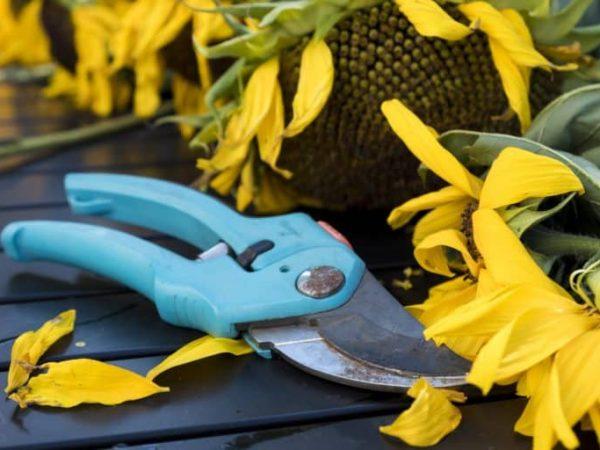 Gartenschere: Test & Empfehlungen (01/20)