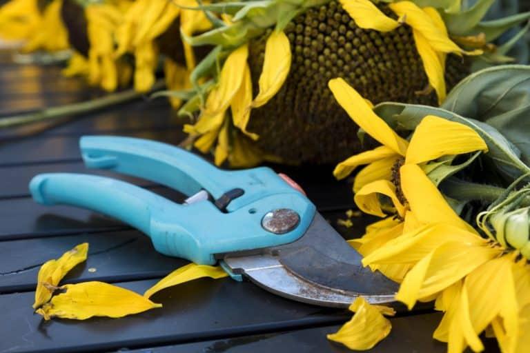 Gartenschere: Test & Empfehlungen (04/20)