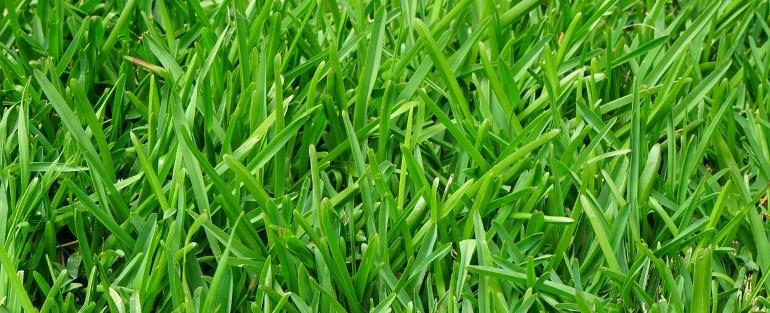 Rasendunger Test 2019 Die Besten Rasendunger Im Vergleich