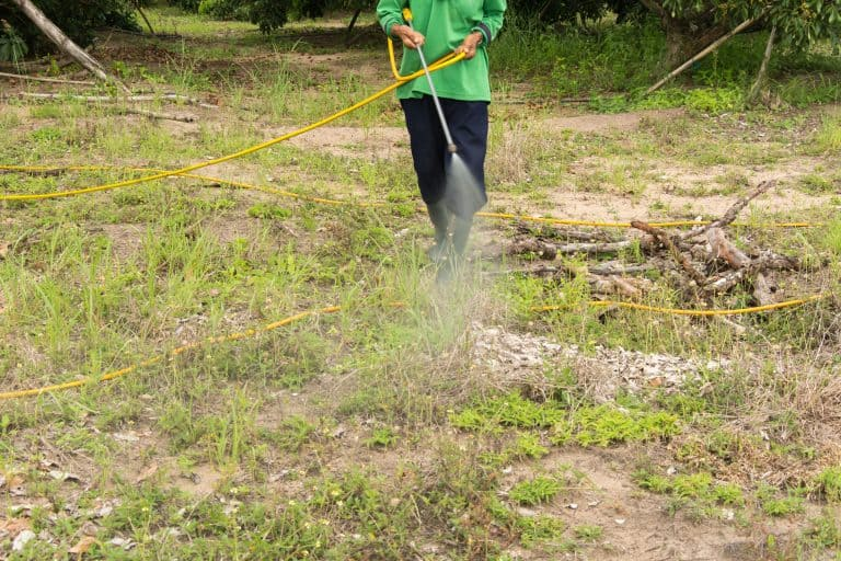 Mann versprüht Pestizide im Garten