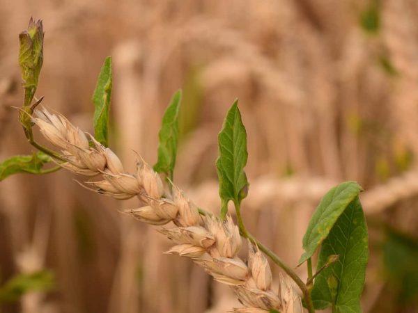 Rasenunkrautvernichter: Test & Empfehlungen (01/20)