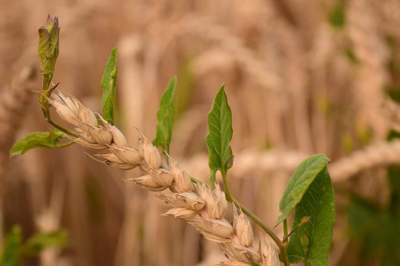 Rasenunkrautvernichter: Test & Empfehlungen (09/20)