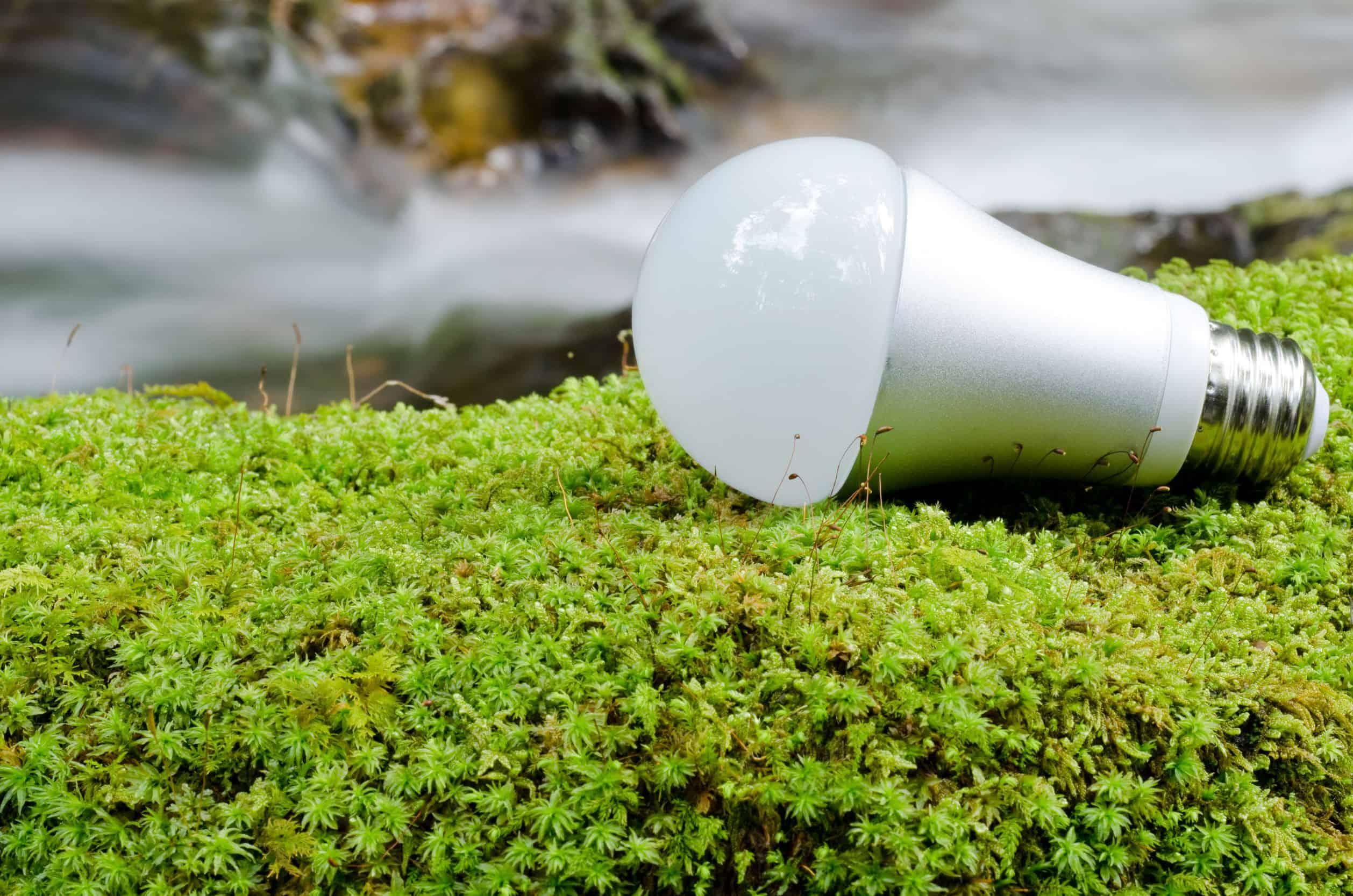 Pflanzenlampe: Test & Empfehlungen (09/20)