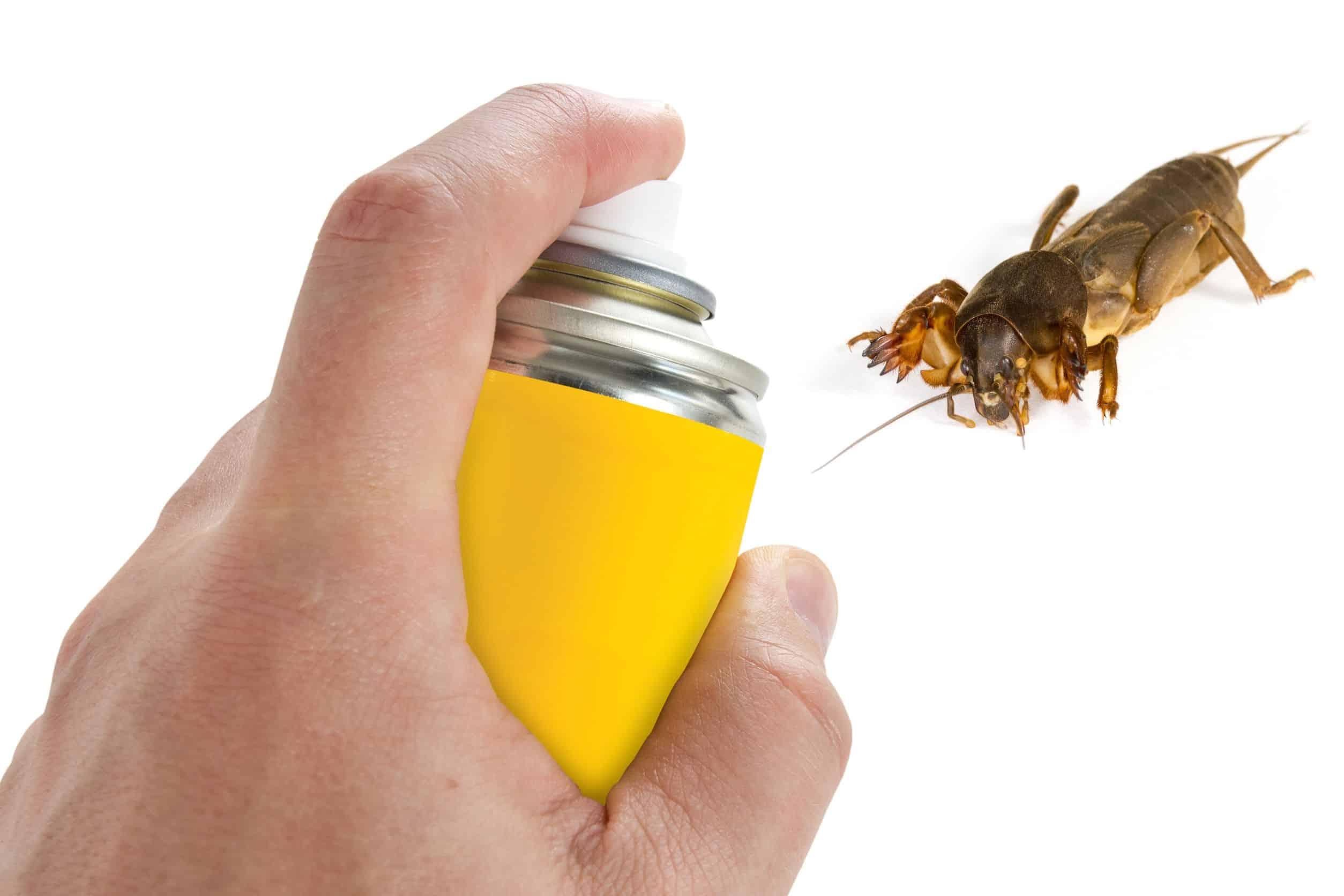 Insektenvernichter Test 2019 Die Besten Insektenvernichter Im