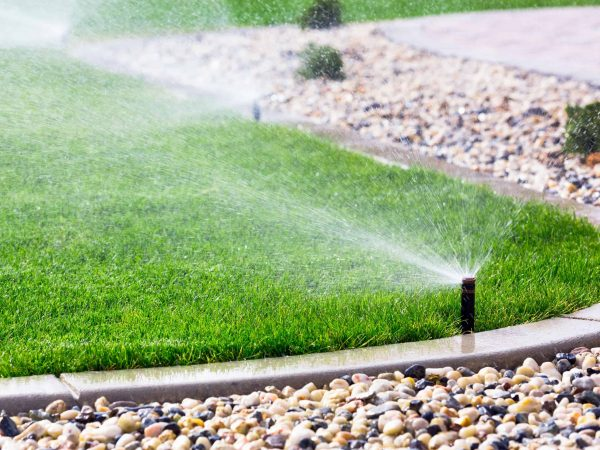 26608833 – automatic sprinklers watering grass