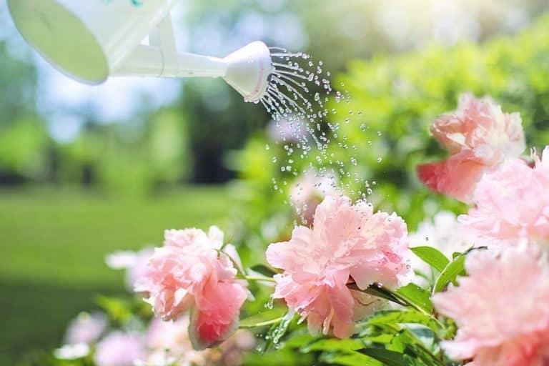 Blumen und Gießkanne