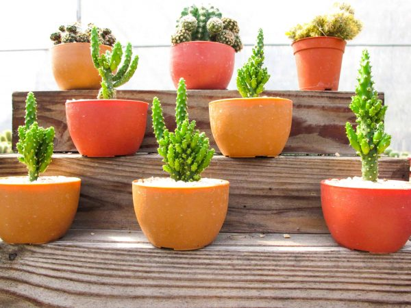 Beautiful cactus place on the wooden shelves / Home decoration