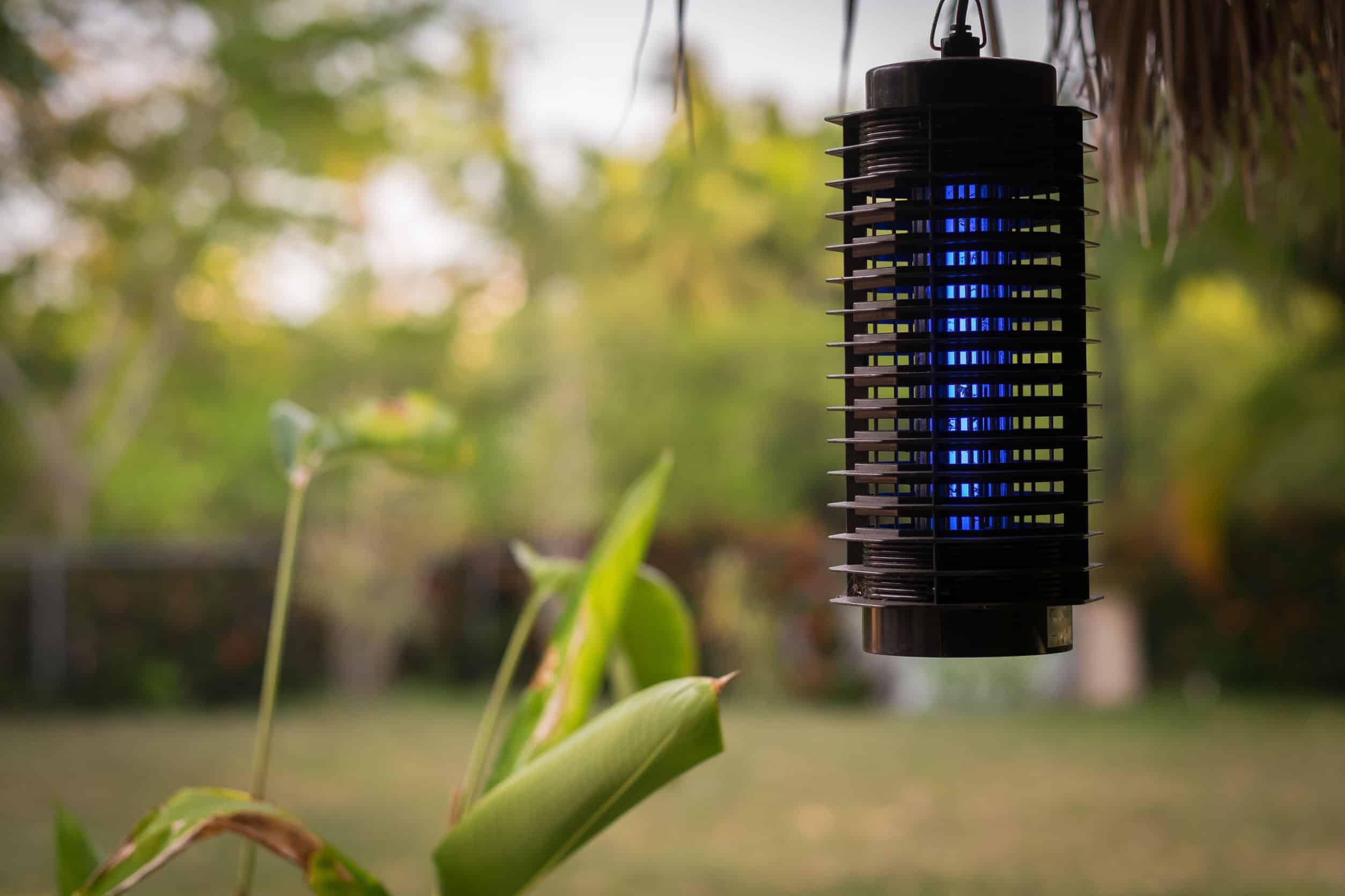 Insektenfalle: Test und Empfehlungen (09/20)