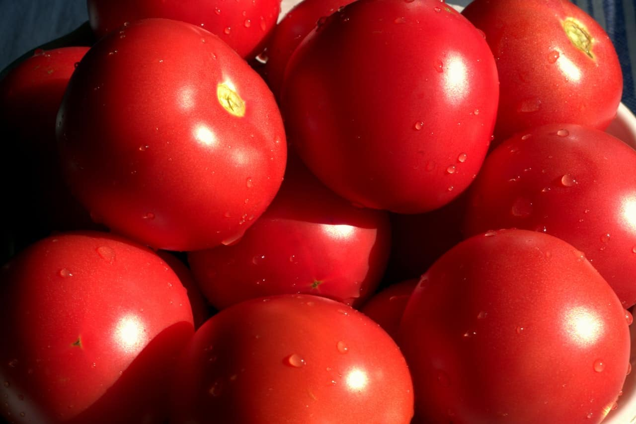 Tomatendünger: Test & Empfehlungen (01/21)
