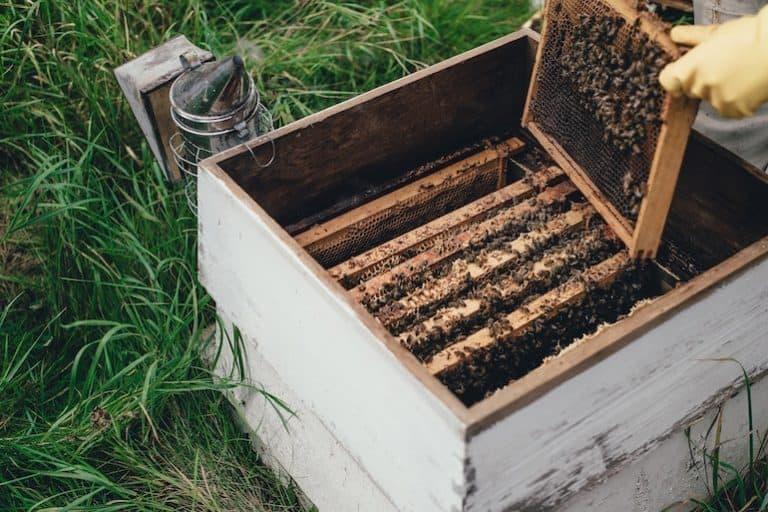 Person nimmt Honigwaben aus Behälter