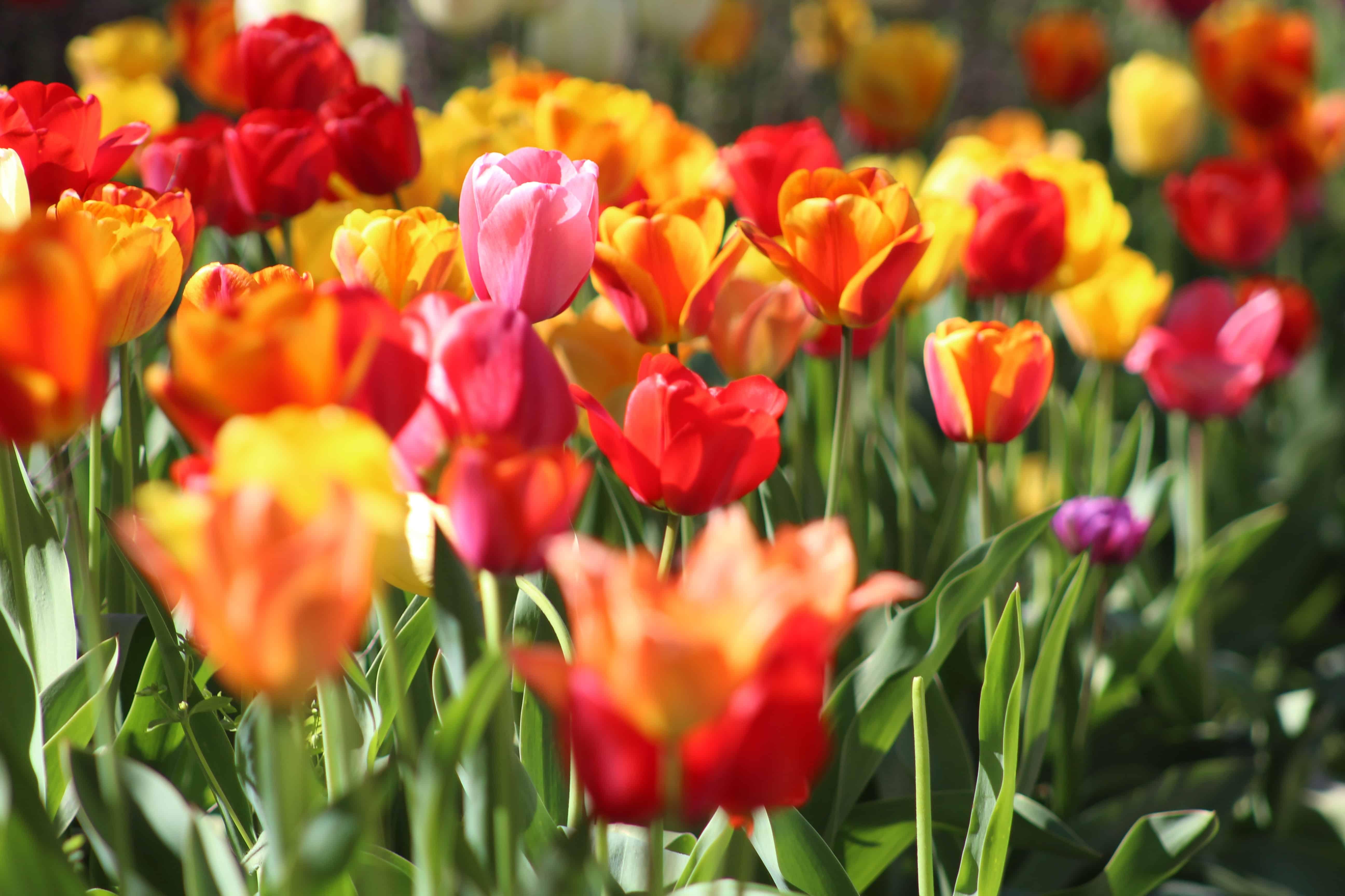 Blumenerde: Test & Empfehlungen (01/20)