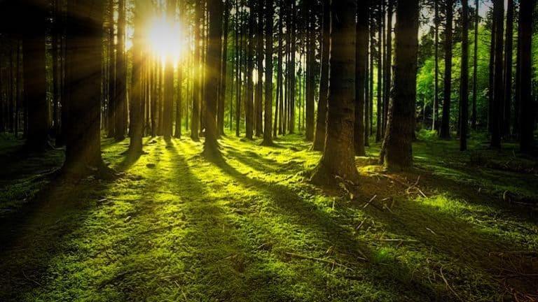 Von Moos bedeckte Waldlichtung