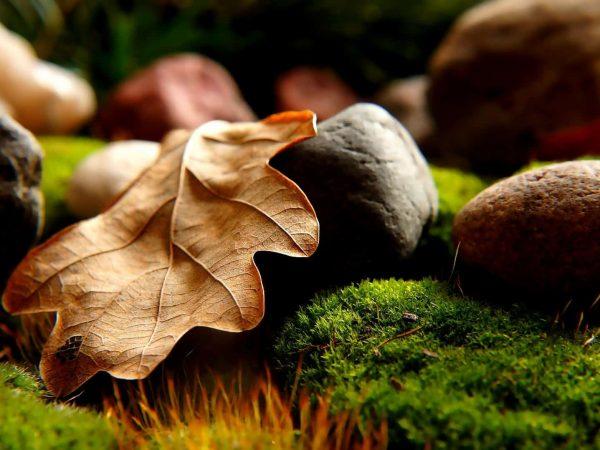 Eichenblatt und Steine auf moosbedecktem Boden