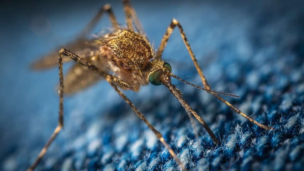Elektrische Insektenfalle: Test & Empfehlungen (03/21)