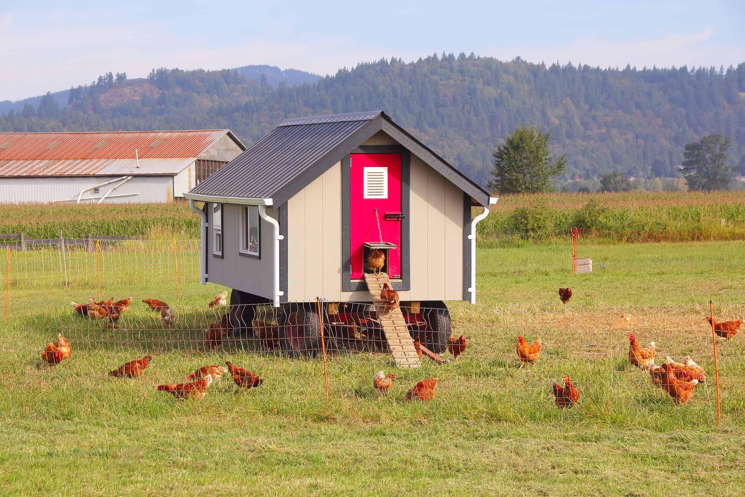 Mobiler Hühnerstall: Test & Empfehlungen (07/20)