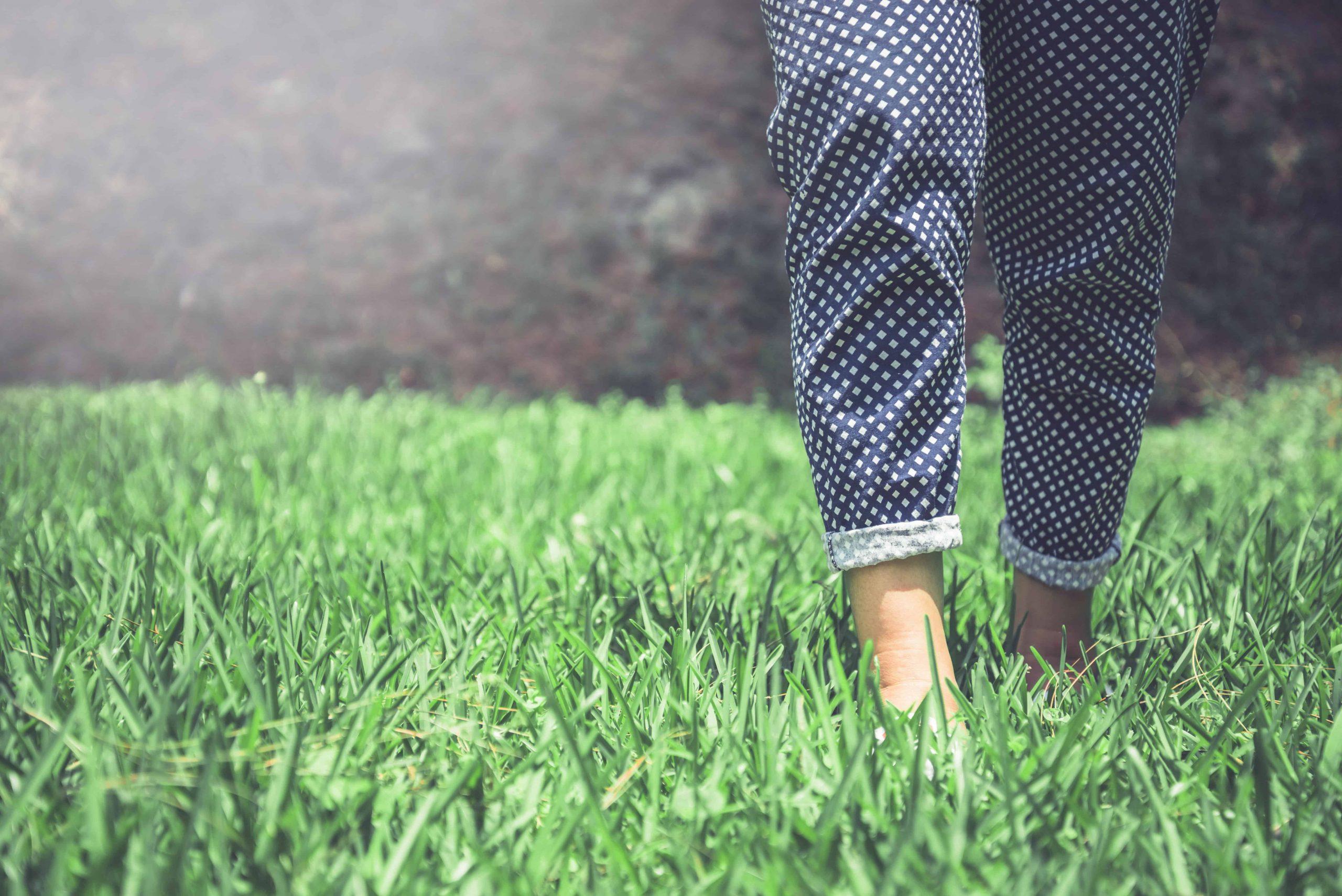 Rasendünger mit Unkrautvernichter: Test & Empfehlungen (09/20)