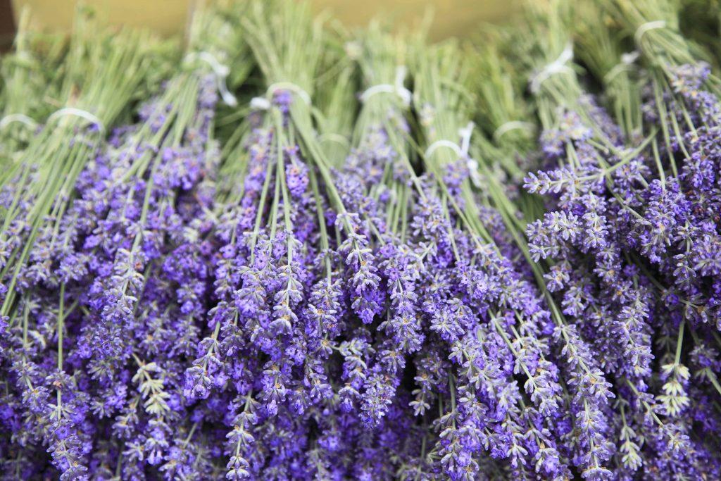 Gut bekannt Lavendel vermehren: Wichtige Fragen und Antworten | GARTENSPRING RU18