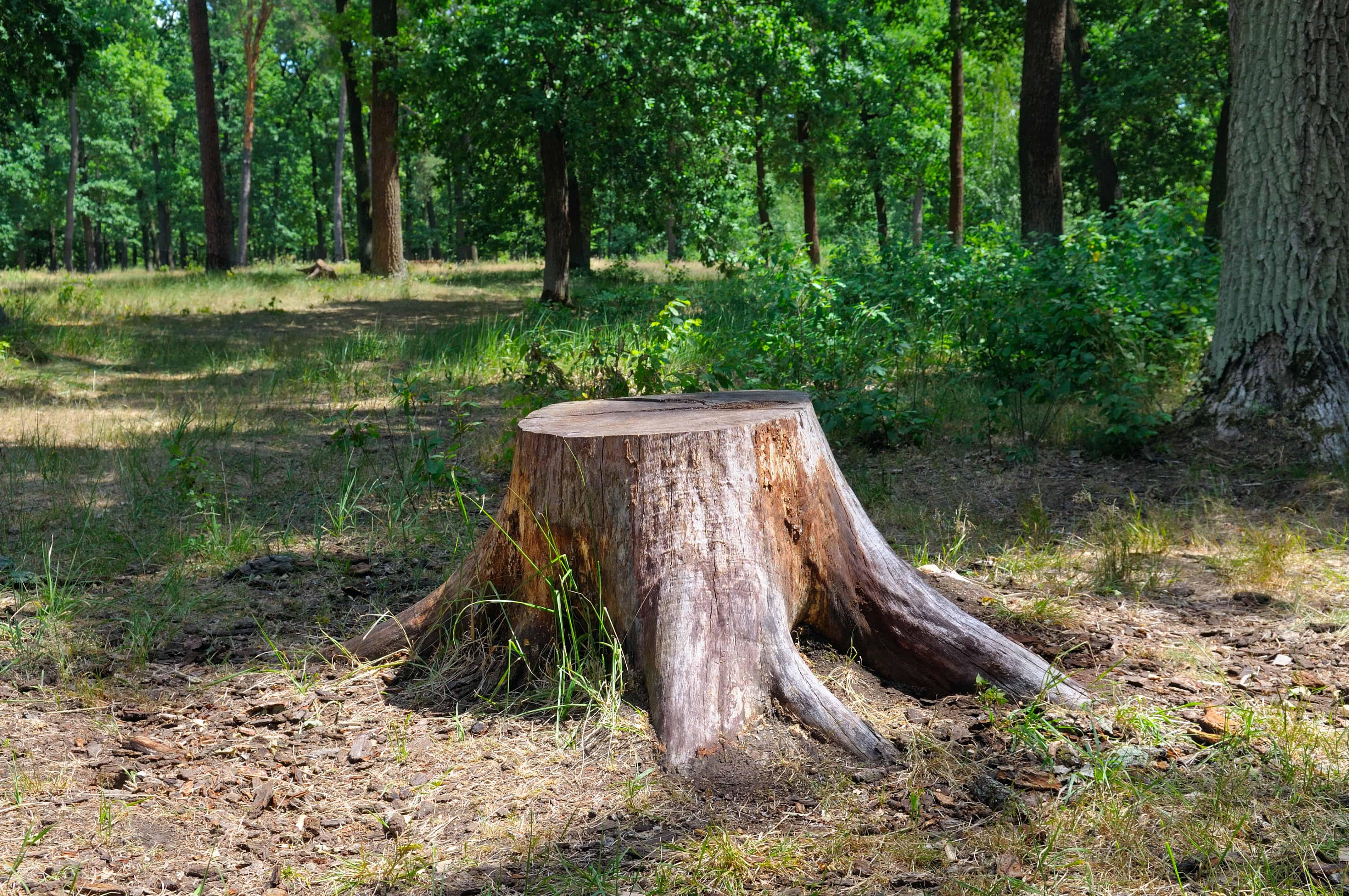 Baumstumpf entfernen: Nützliche Anleitung und Methoden