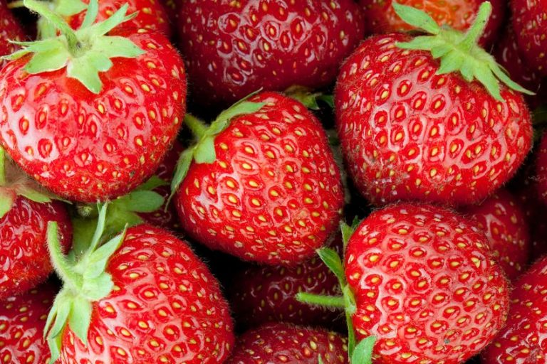 Leuchtend rote Erdbeeren