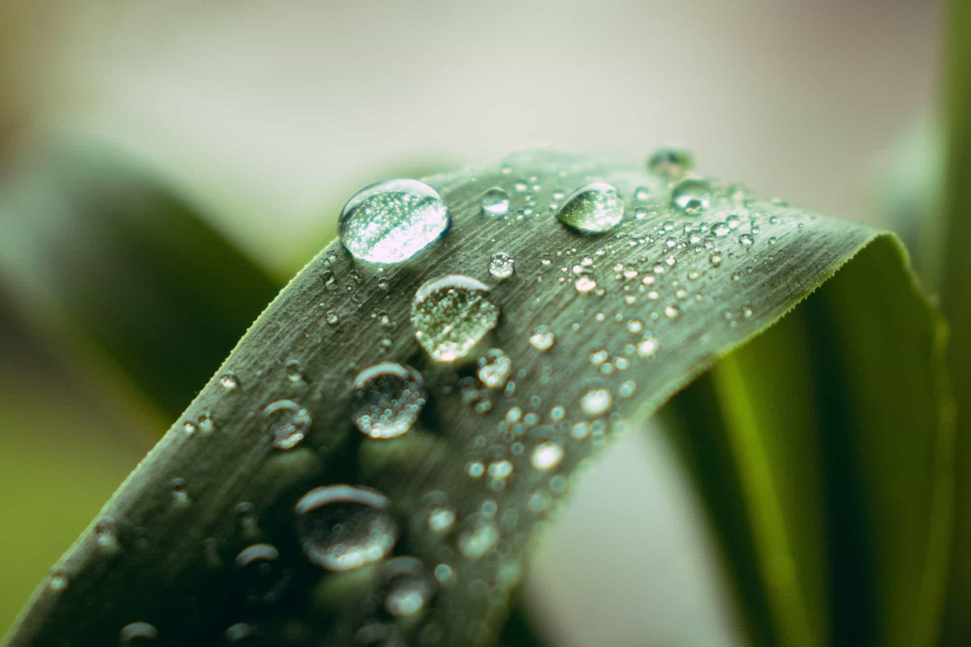 Regenmesser: Test & Empfehlungen (08/21)