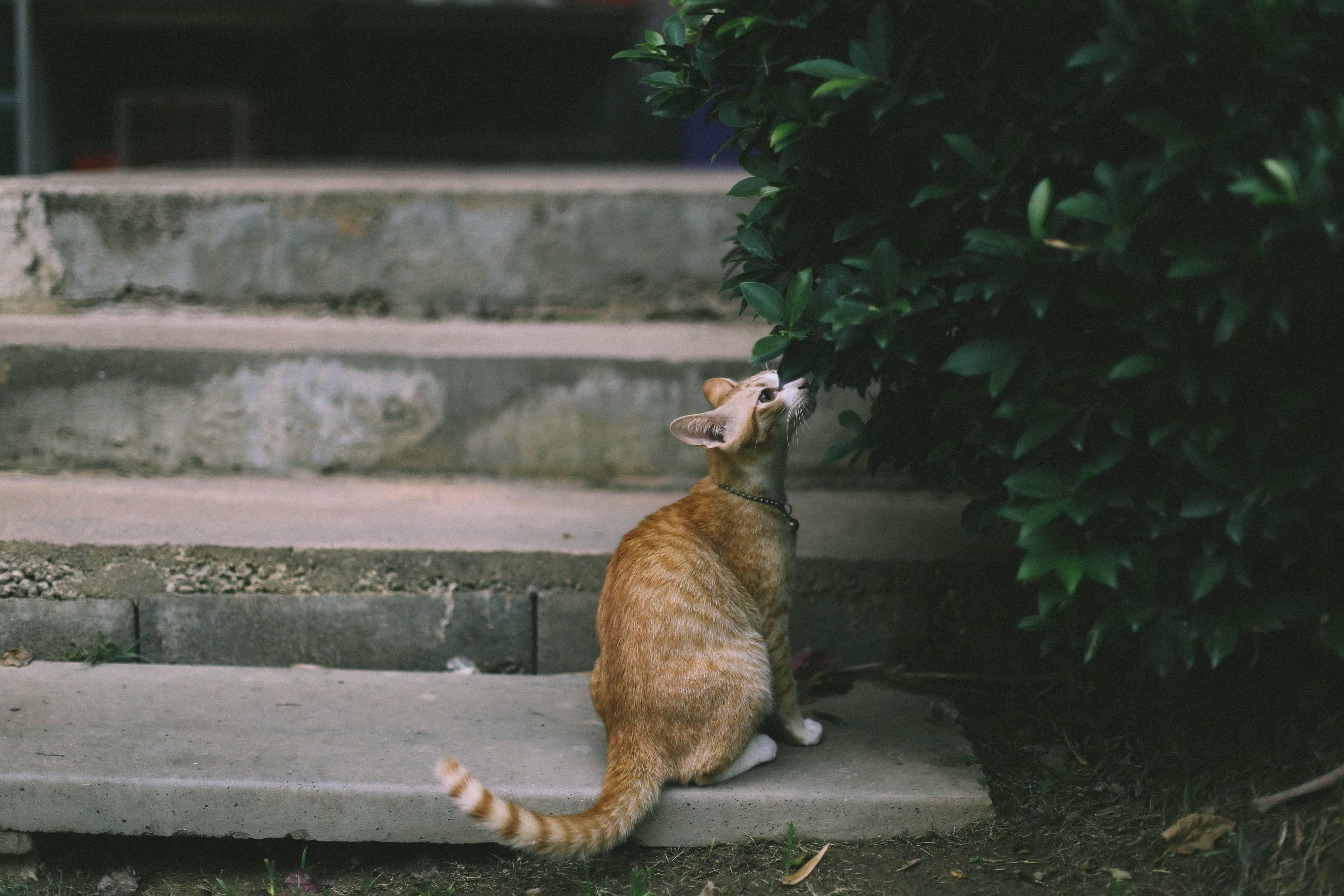 Katzen vertreiben: Wenn schnurrende Fellknäuel zur Plage werden