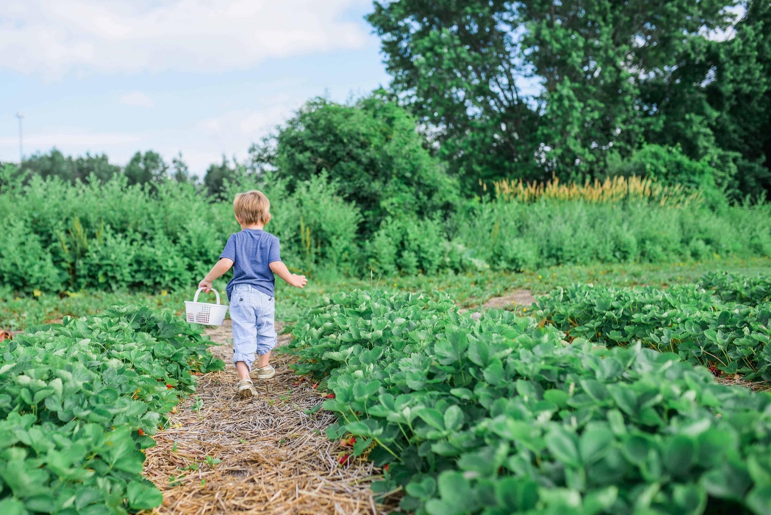 Erdbeeren düngen: Die besten Tipps und Tricks