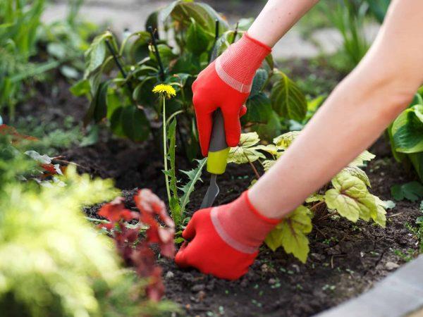 Die Unkrautharke ist auch unter den Begriffen Gartenhacke und Unkrautrechen bekannt. Bildquelle: 123rf.com / 77812298)