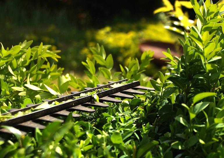 Buchsbaumscheren sind spezielle Gartenscheren, mit denen sich Buchsbäume schneiden, trimmen und in Form bringen lassen.