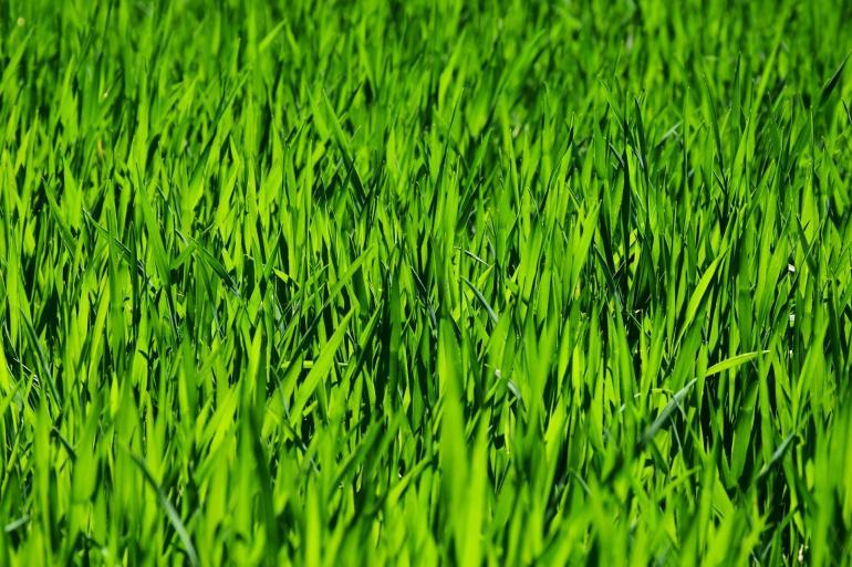 Güde Rasenmäher-2