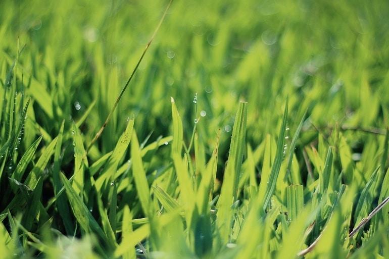 Hecht Rasenmäher-3