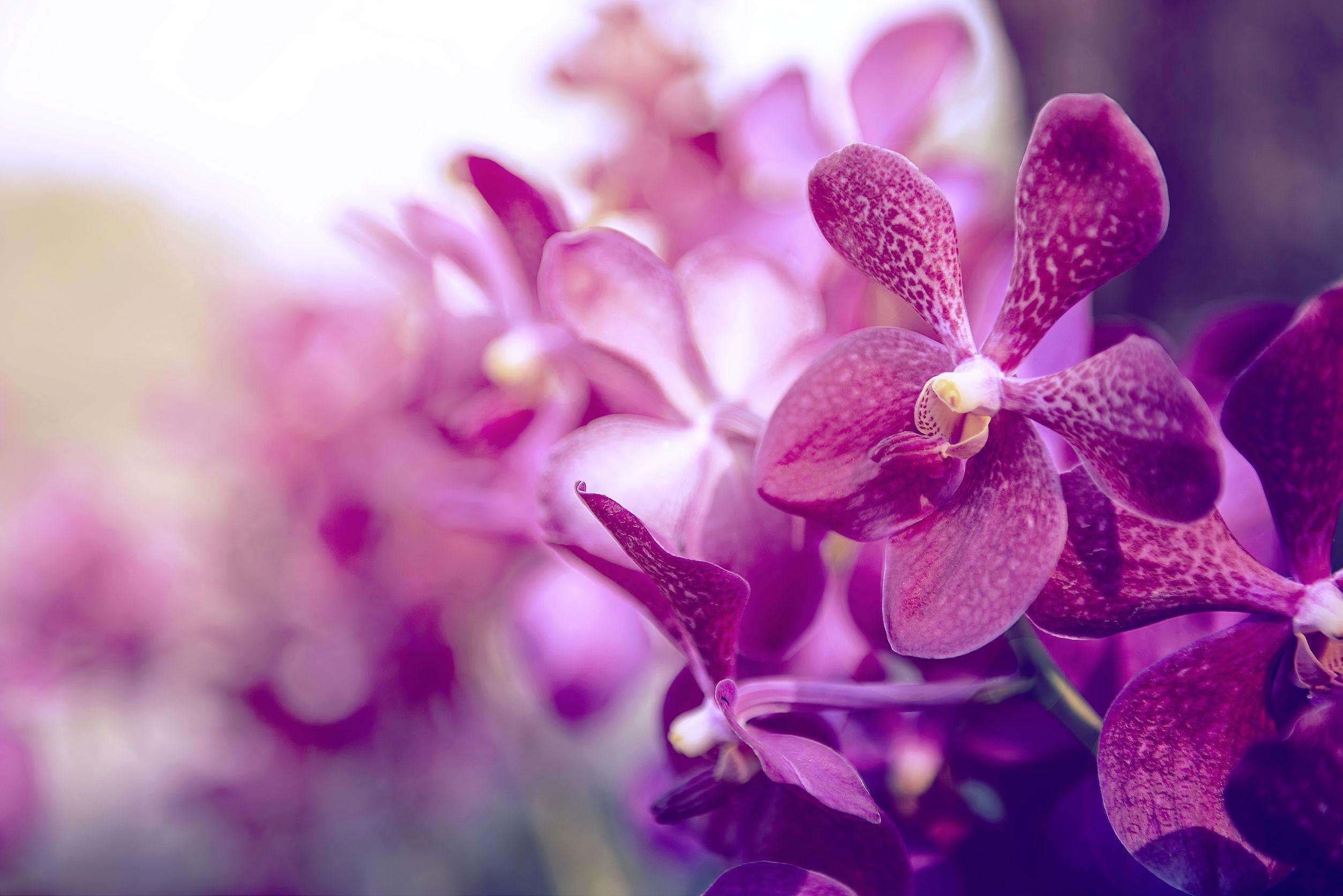 orchideendünger-test