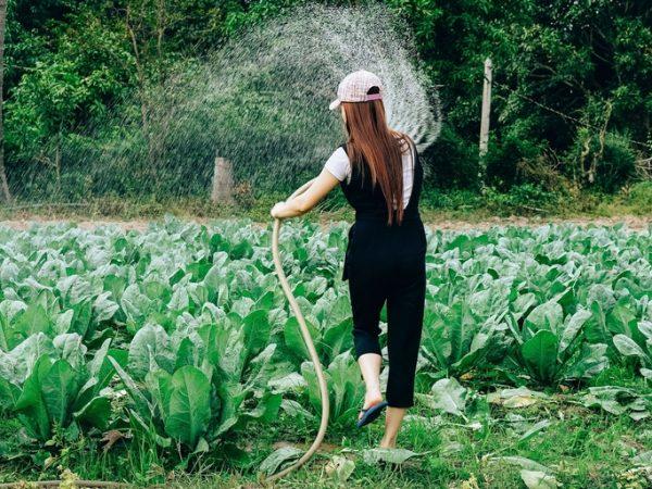 Mit einer Regenfasspumpe kannst du rückenschonend größere Bereiche schnell mit Hilfe eines Gartenschlauchs bewässern. <br /></noscript>(Bildquelle: Tony Pham/unplash)