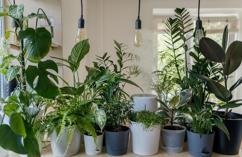 Pflanzenlampe LED-1