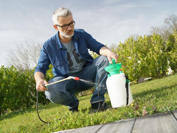 Man using garden sprayer on lawn in backyard