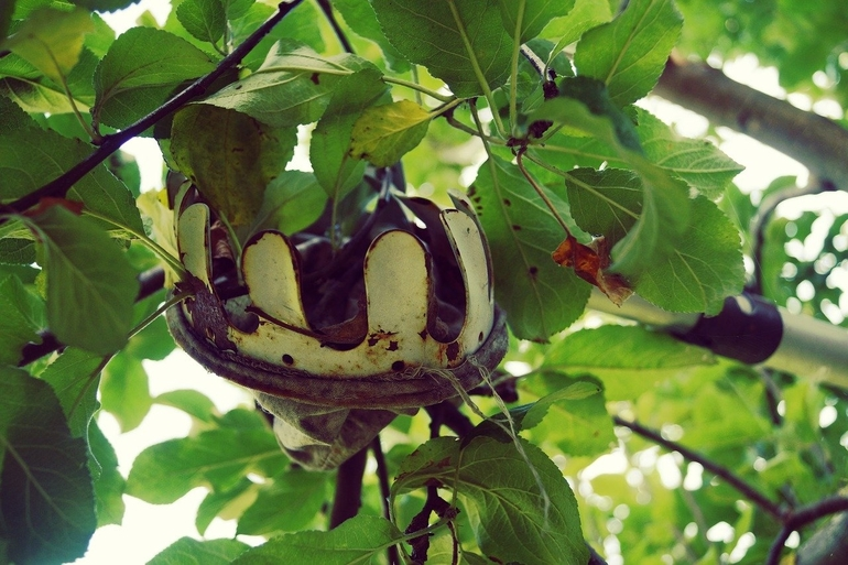 Obstpflücker-1