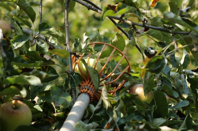 Obstpflücker-2