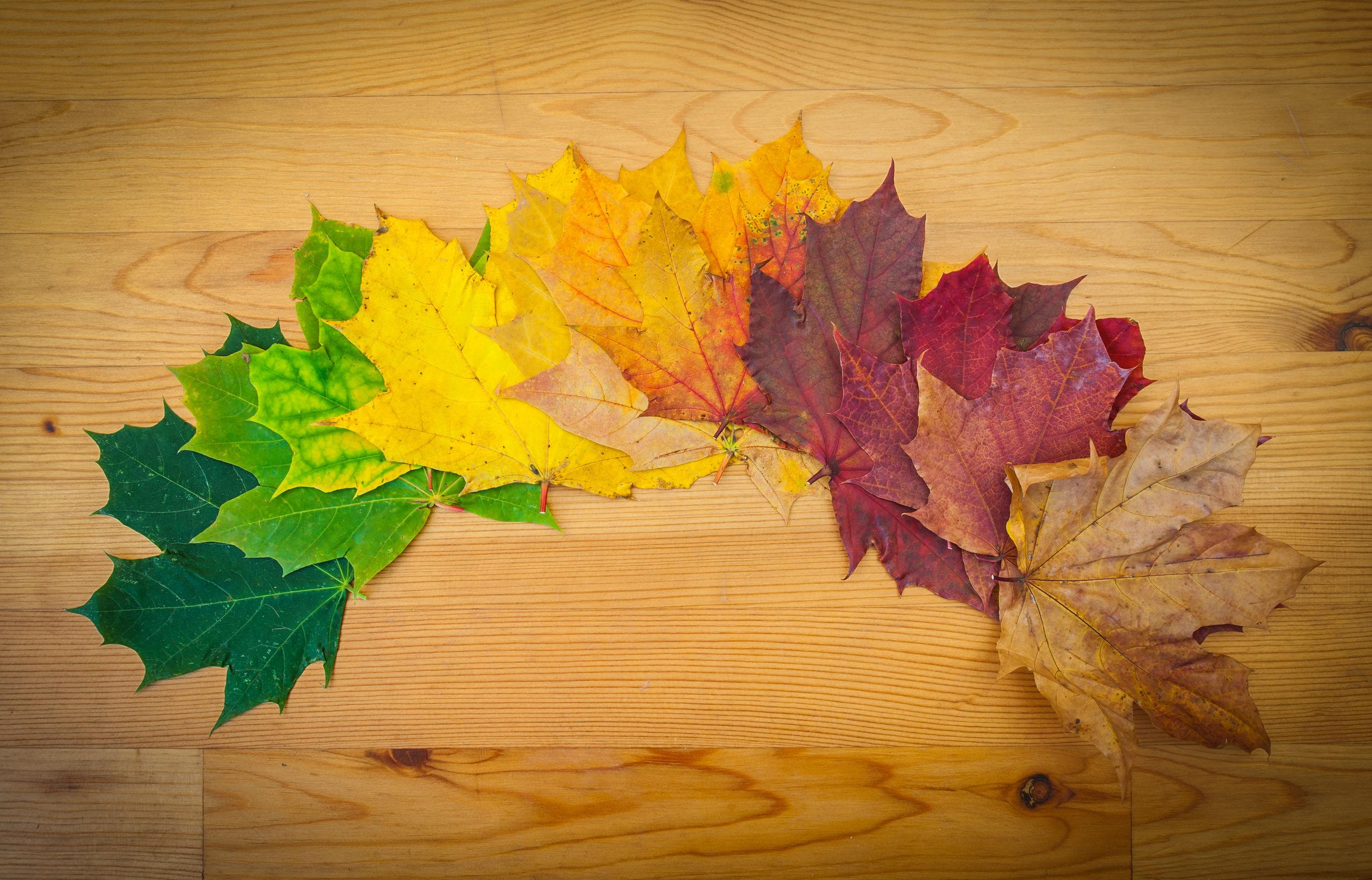 Blätter bestimmen-header