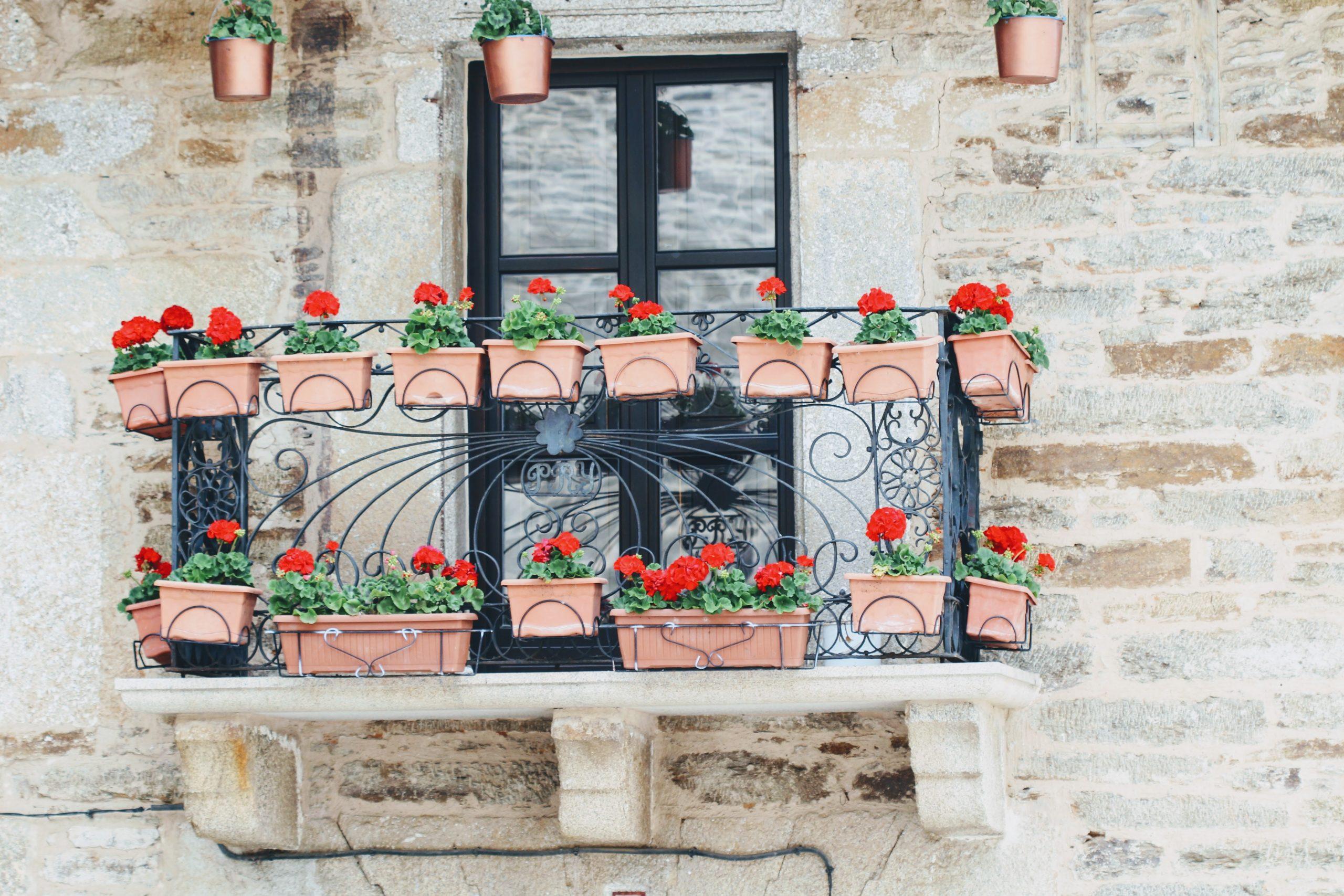 Balkonpflanzen Schatten