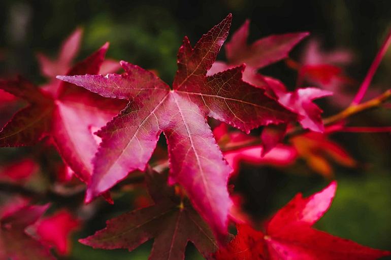 Blätter bestimmen-1