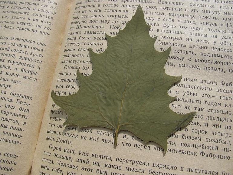 Blätter bestimmen-2